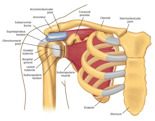 What Causes Shoulder Pain and Popping