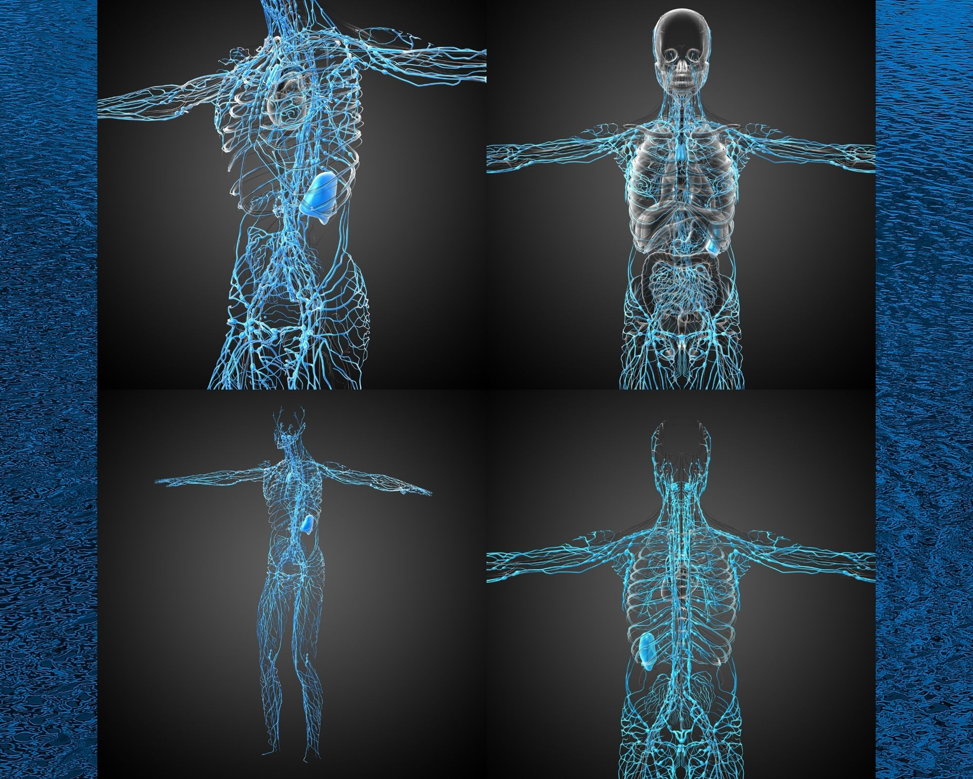 Images of the lymphatic system throughout the body. - just breathe