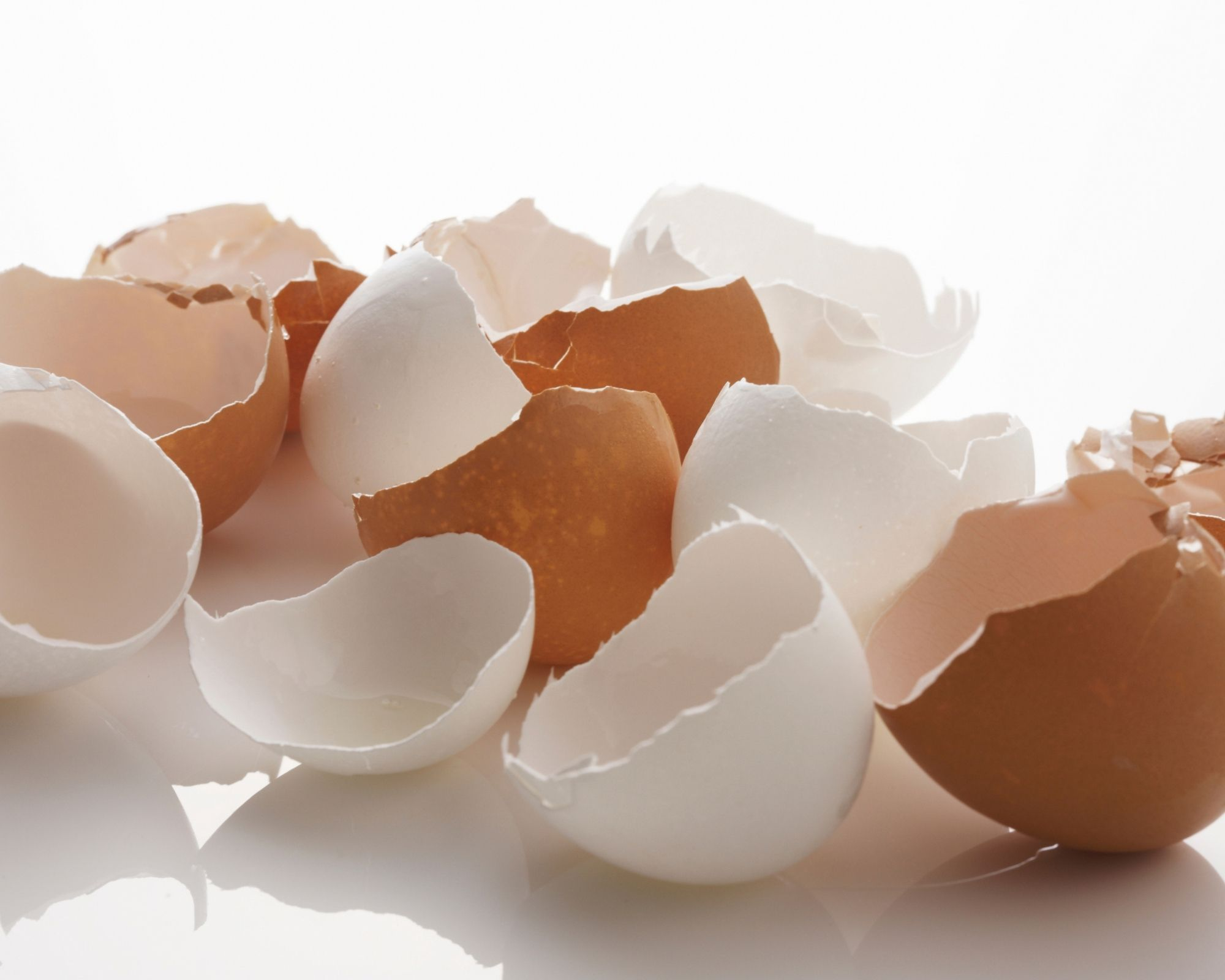 Egg Shells - Indicating How Egg Shell Membrane Can Help a Joint