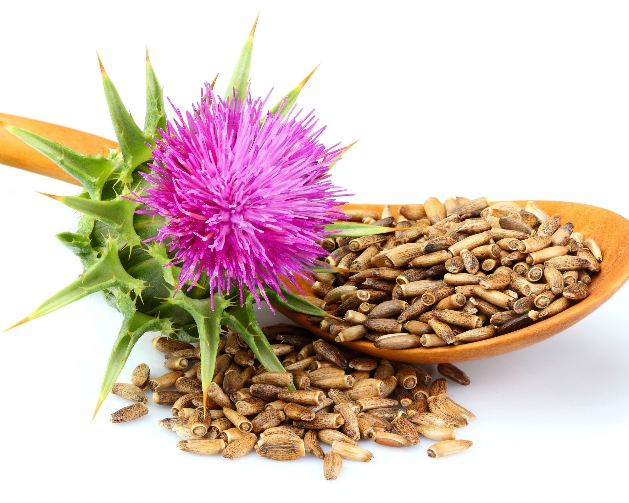 milk thistle plant and seeds